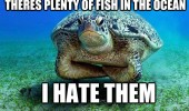 angry grumpy turtle fish sea ocean animal hate them funny pics pictures pic picture image photo images photos lol