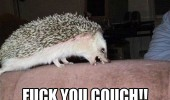 angry hedgehog animal biting couch fuck you sofa funny pics pictures pic picture image photo images photos lol