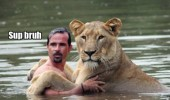 angry lion real man cuddling pool water facepalm animal funny pics pictures pic picture image photo images photos lol
