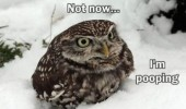 not now angry owl pooping snow bird animal funny pics pictures pic picture image photo images photos lol