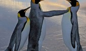 hold on penguin posh sir wife angry fighting animal funny pics pictures pic picture image photo images photos lol