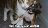 chill angry cat dog probation animal funny pics pictures pic picture image photo images photos lol