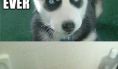 dog puppy angry husky bath animal slow death funny pics pictures pic picture image photo images photos lol