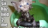 wet cat kitten lied bath animal sad angry funny pics pictures pic picture image photo images photos lol
