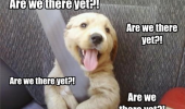 there yet happy dog animal car seat belt funny pics pictures pic picture image photo images photos lol