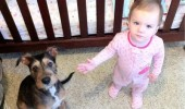 dog animal angry baby kid pony wtf funny pics pictures pic picture image photo images photos lol