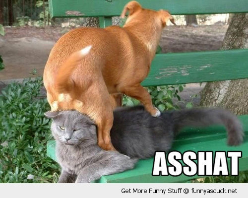 asshat dog sitting on cats head animal angry funny pics pictures pic picture image photo images photos lol
