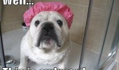 dog shower cap awkward animal bulldog funny pics pictures pic picture image photo images photos lol