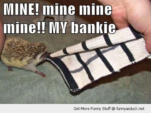 mine blanket bankie baby haedgehog animal cute biting funny pics pictures pic picture image photo images photos lol