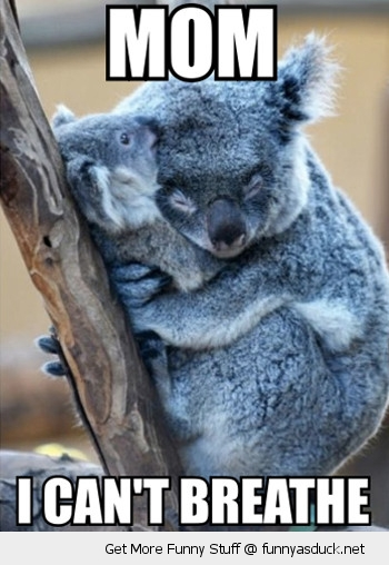 cute koala bears baby cuddling hugging mom cant breath animal funny pics pictures pic picture image photo images photos lol