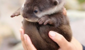 cute baby otter animal dangerous out there take this pun joke funny pics pictures pic picture image photo images photos lol