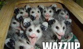 wazzup box happy baby possums animals smiling funny pics pictures pic picture image photo images photos lol