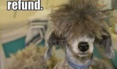 bad hair cut dog refund animal ugly funny pics pictures pic picture image photo images photos lol