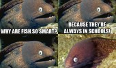 bad joke eel animal fish schools meme funny pics pictures pic picture image photo images photos lol