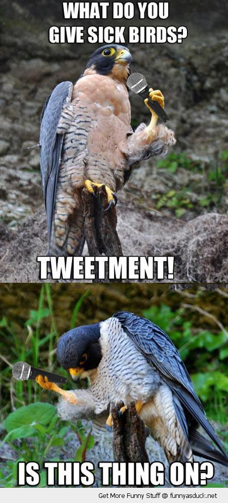 bad joke falcon sick birds microphone pun tweetment funny pics pictures pic picture image photo images photos lol