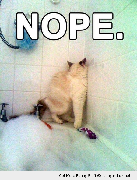 nope cat lolcat bath water animal funny pics pictures pic picture image photo images photos lol