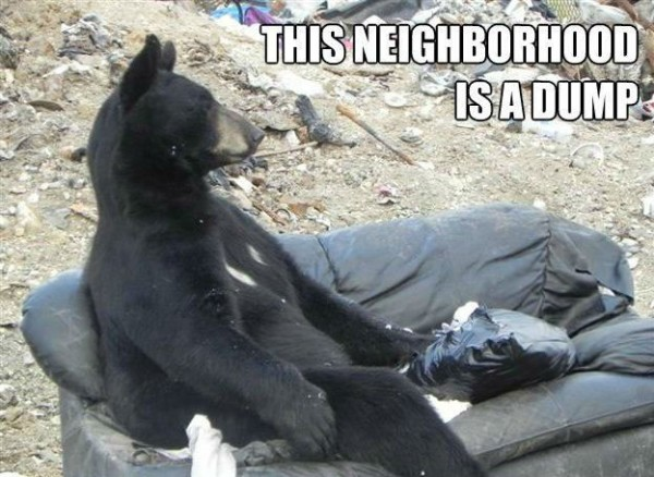 sad depressed bear animal sitting couch sofa neighborhood dump funny pics pictures pic picture image photo images photos lol
