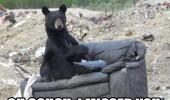 bear animal rubbish garbage tip dump couch home remote funny pics pictures pic picture image photo images photos lol