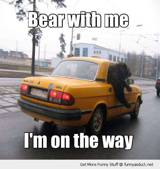 bear with me animal driving car pun joke taxi on the way funny pics pictures pic picture image photo images photos lol