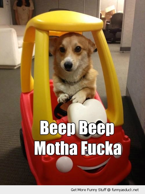 beep mother motha fucker fucka dog animal toy car cute funny pics pictures pic picture image photo images photos lol
