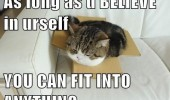 cat lolcat animal stuck box believe yourself fit anything funny pics pictures pic picture image photo images photos lol