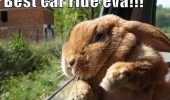 best car ride ever happy bunny rabbit cute animal funny pics pictures pic picture image photo images photos lol
