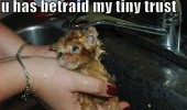 betrayed trust wet cat kitten lolcat bath animal funny pics pictures pic picture image photo images photos lol