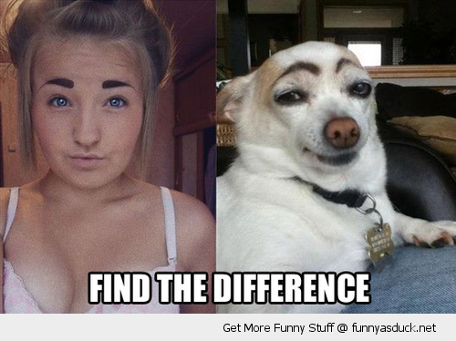 find spot the difference dog girl eyebrows animal funny pics pictures pic picture image photo images photos lol