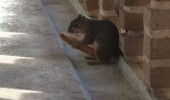 sleazy squirrel animal breadstick big see nuts my place funny pics pictures pic picture image photo images photos lol