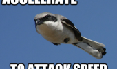 bird animal flying accelerate attack speed hunting funny pics pictures pic picture image photo images photos lol
