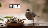 mine bird eating nuts seeds angry selfish animal funny pics pictures pic picture image photo images photos lol