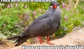 bird animal mustache your argument is invalid funny pics pictures pic picture image photo images photos lol