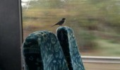 bird pigeon animal raining bus train seat funny pics pictures pic picture image photo images photos lol