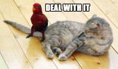 deal with it bird cat tail lolcat parrot animal funny pics pictures pic picture image photo images photos lol