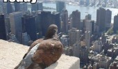bird pigeon building shit on crap today animal thinking funny pics pictures pic picture image photo images photos lol