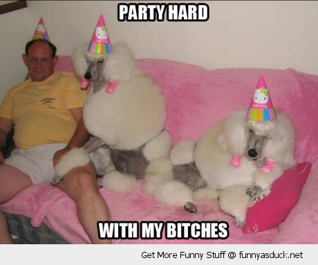 party hard bitches dogs birthday hats man poodles animals funny pics pictures pic picture image photo images photos lol