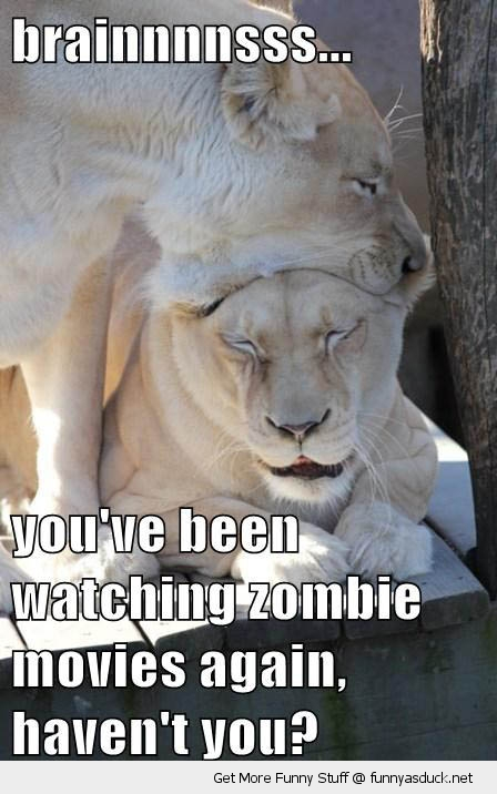 brains lions biting head zombie movies zoo animal funny pics pictures pic picture image photo images photos lol