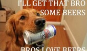 bros love beers dog animal can funny pics pictures pic picture image photo images photos lol