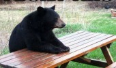 built this picnic table bear hands animal pun joke funny pics pictures pic picture image photo images photos lol