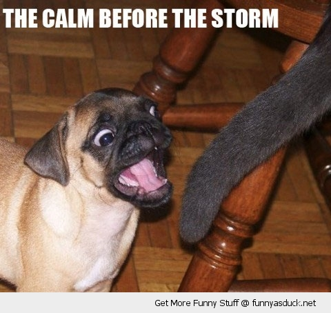 calm before storm animal dog pug biting cats tail funny pics pictures pic picture image photo images photos lol