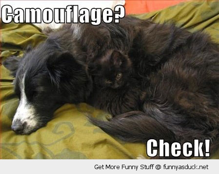 camouflage check hiding cat dog lolcat animal funny pics pictures pic picture image photo images photos lol