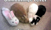 camouflage level slipper bunnies rabbits animals funny pics pictures pic picture image photo images photos lol