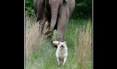 followed me home dog elephant animal keep him funny pics pictures pic picture image photo images photos lol