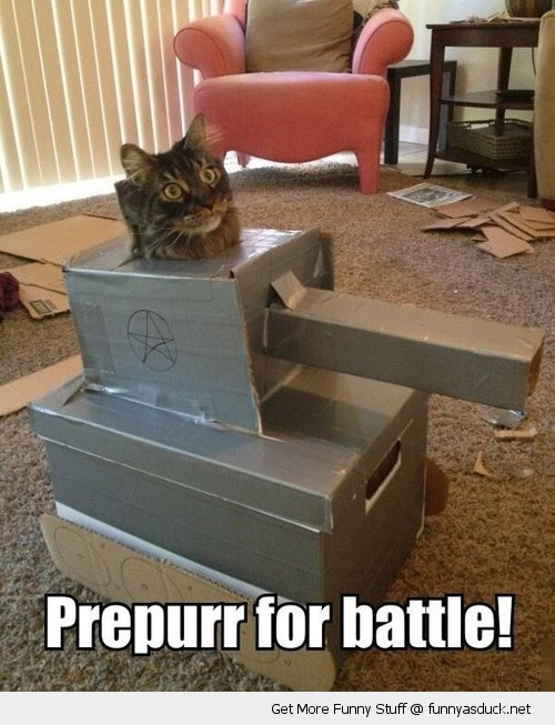prepare for battle cat animal cardboard tank cute funny pics pictures pic picture image photo images photos lol