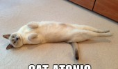 cat atonic lying down playing dead lolcat animal funny pics pictures pic picture image photo images photos lol