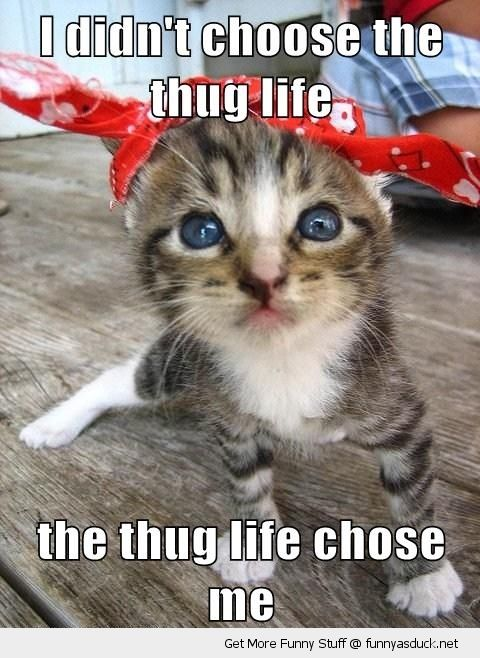 cute cat kitten bandanna thug life choose me animal lolcat funny pics pictures pic picture image photo images photos lol