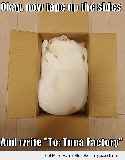 cat box tuna factory animal lolcat funny pics pictures pic picture image photo images photos lol