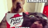 dog cat animal pizza hut photo bomb crazy mad ermahgerd pertsah hurt funny pics pictures pic picture image photo images photos lol