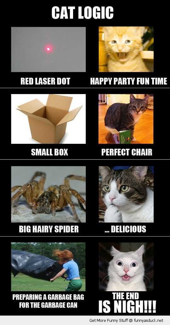 cat logic red dot spider box garbage rubbish bag bin faces animal lolcat funny pics pictures pic picture image photo images photos lol