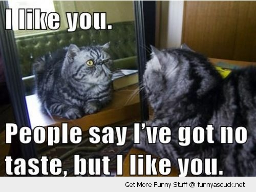 cat lolcat animal looking mirror i like you bad taste funny pics pictures pic picture image photo images photos lol